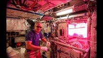 NASA astronauts will eat space-grown veggies in the ISS - International Space Station