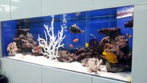Saltwater Fish Only Aquarium with Tangs, Angelfish, Clown Fish and Coral Decoration