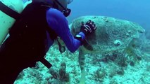 Swimming with Sea Turtles Beautiful Surprises Underwater