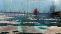 Mini esibizione delfini acquario di genova pt2