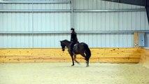 Corey Jumping Grid Work at Tebogo Sport Horses (jumper for sale)