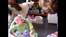 Funny laughing baby 1 New funny videos of babies 面白い赤ちゃん Bébé rire drôle