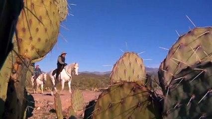 Bradshaw Mountains Horse RIding, Arizona