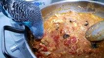 Yemek Yiyen Muhabbet Kuşu