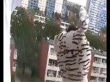 min kompis zebra i malmö