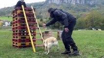 Soccorso Alpino - Protezione Civile Cinofila