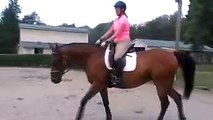 Hot nervous horse. Learning how to canter relaxed  S4  Horse Training