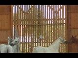 EAHAE Horses @Grey Horse Coaching