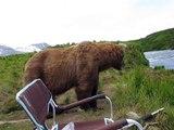 Un ours brun vient s'asseoir à côté d'un pêcheur.. le flip !!
