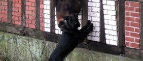 Regardez ce que font ce chien et ce cheval lorsqu'ils pensent être seuls.