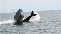 Moment a Humpback Whale Breaches Right next to Motor Boat