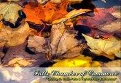 Falls Chamber of Commerce ~ St. Croix Falls, WI & Taylors Falls, MN