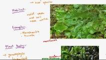 FSc Biology Book1, CH 9, LEC 5; Classification of Bryophytes-Hepaticopsida