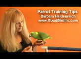 Parrot Training Tips - Keeping Your Parrot Well Behaved