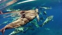 nage avec dauphins en liberté