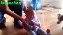 Funny Videos Funny Cats Funny Babies Laughing Funny Animals Videos Funny Dogs 2015