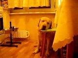 Гриша ждет свой ужин