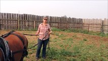 Cherry Ridge Ponies - Sonnet - training Video 5 - driving reining harness