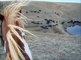 Crazy Horseback Riding, Moving Cows on the Montana Prairie!!!