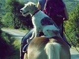 Un maitre n'est plus rien sans son chien - Bilou, mon chien, tu va me manquer..