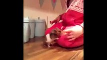 Funny Hamster Video Compilation 2015 Hamster Fails Funny Hamster Sleeping