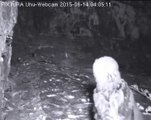eifel uhu  2015-06-0-14  04:05  little prey