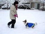 Nikko in the snow (Nikko仔第一次玩雪)