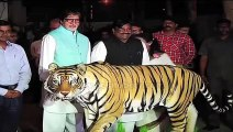 Save Our Tigers' campaign ambassador Amitabh Bachchan raises his voice in concern for the endangered tiger.