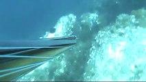 pesca sub sardegna - dentice 5,7kg in caduta.mpg