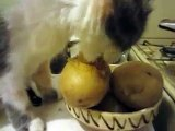 pusy eating boiled potatoes! :D