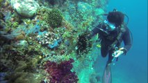 North Sulawesi - Tangkoko Reserve, diving at Lembeh and Bunaken islands - Indonesia