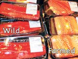 How to tell wild salmon from farmed