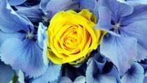Yellow Summer Colour Theme for Wedding: Wedding Flowers and Bridal Bouquets