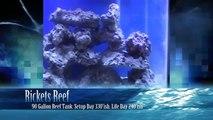 Rickets Reef  90 Gallon Day 330ish