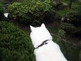 秋田犬街の様子は塀の上から確認します【akita dog】