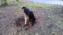 Ce chien essaye de chopper son baton
