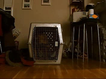 Breaking out of vari kennel crate