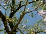 Wild Animal Documentary The Elephant Emperor And Butterfly Tree NEW Nature Documentary