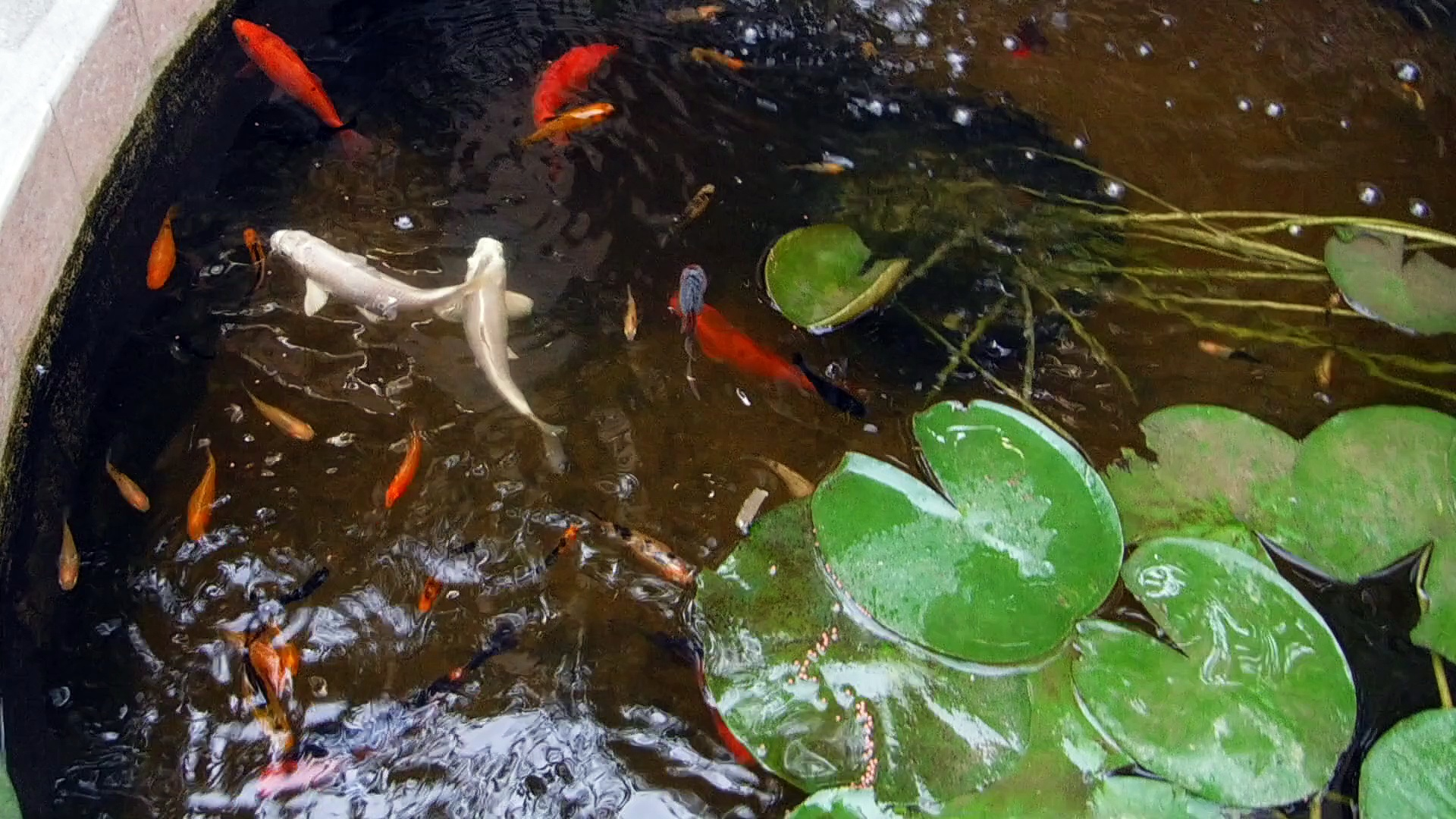Pond – Underwater