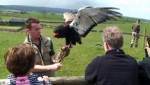 Yorks Dales Falconry Centre.