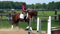 Red Niila: Hanoverian Mare For Sale