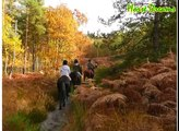 Horse Dreams - Promenades et randonnées à cheval en forêt de Fontainebleau