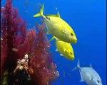 Los arrecifes de coral de aguas tropicales