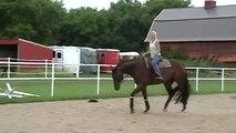 QH horse for sale, 7 yo qh gelding