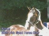 Azrael--Irish Sport Horse--Free Jumping, 06/25/07
