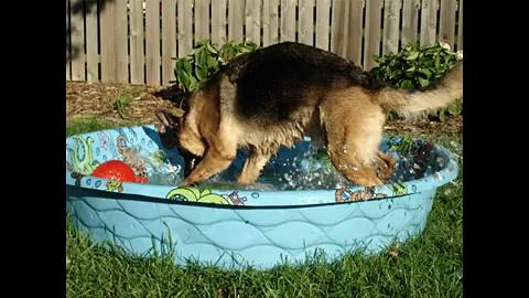 Big dog, Rottweiler dog, your big dog,  running with the big dogs, Rottweiller, Alsatian, Labrador