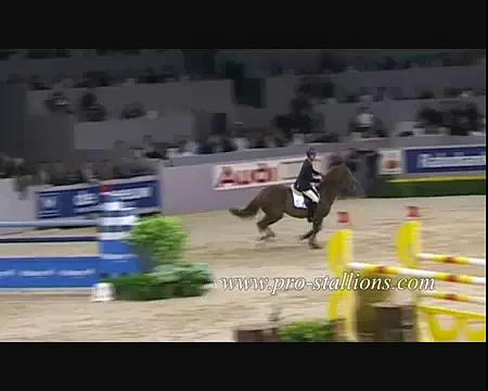 Supernatural horses