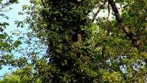 Les forestiers privés face aux défis de la forêt française