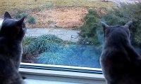 Cette discussion entre deux chats est tout simplement hilarante. Si seulement elle était sous-titrée !
