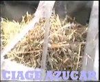 Cayalti, Chiclayo, Lambayeque, Hacienda, Caña de Azucar